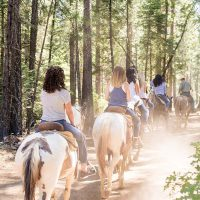 A horseback trail ride through the forest at Greenhorn Ranch