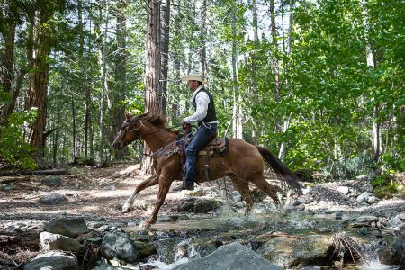 Loping through a stream on a forest trail ride at Greenhorn Ranch