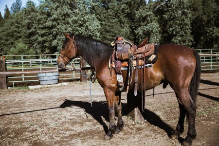 A horse saddled western style and ready for a ride at Greenhorn Ranch