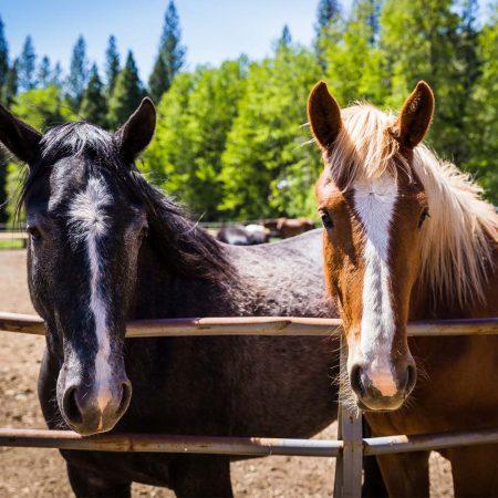 Horseback Riding at Greenhorn Ranch - Two horses awaiting their riders