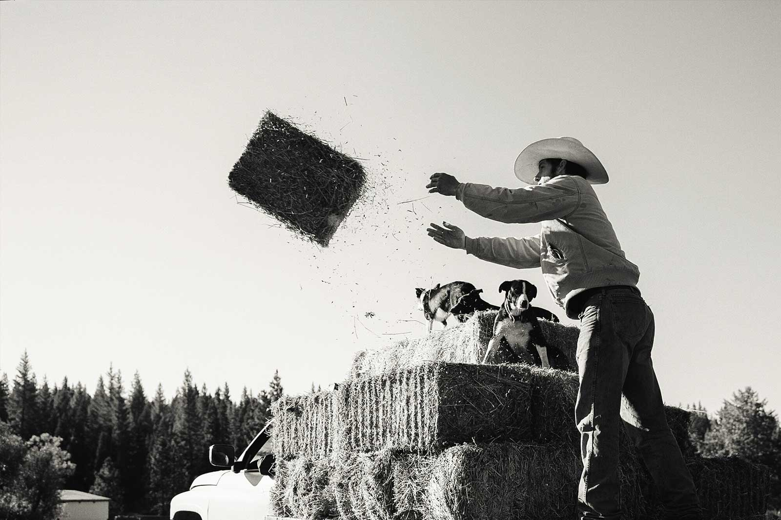 Tossing hay bales from the back of the truck.