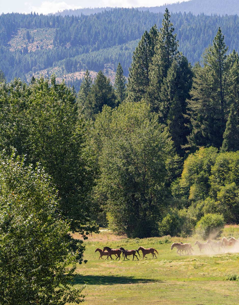 Horses loping through the woods at Greenhorn Ranch