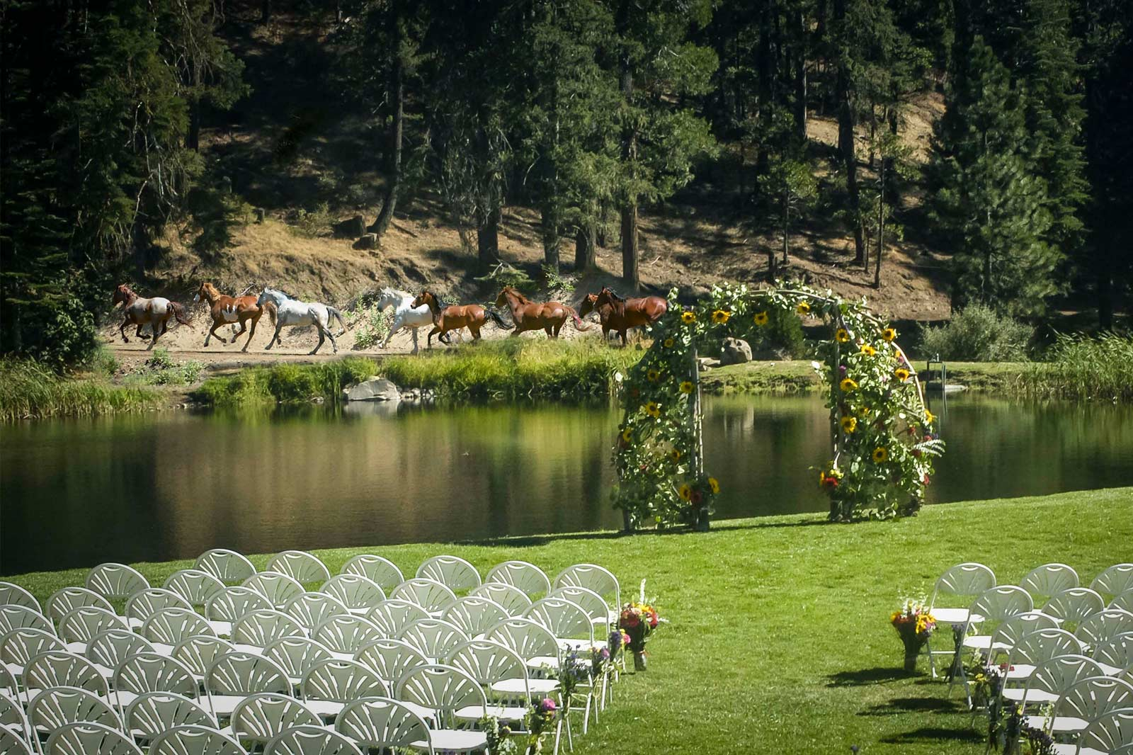 Horses galloping on the other side of the pond from a wedding